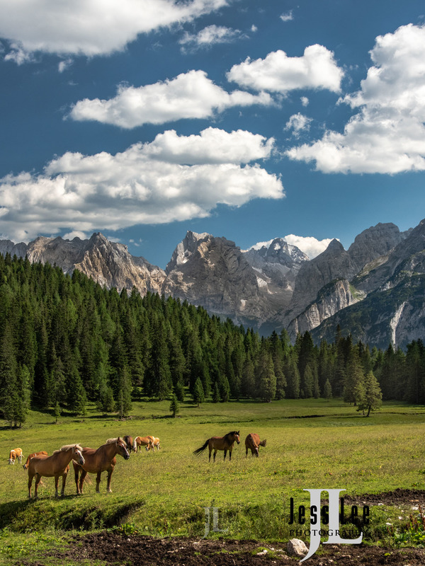 dolomites-_LEE6445-9ff56.jpg :: Dolomite mountains in summer with horses.