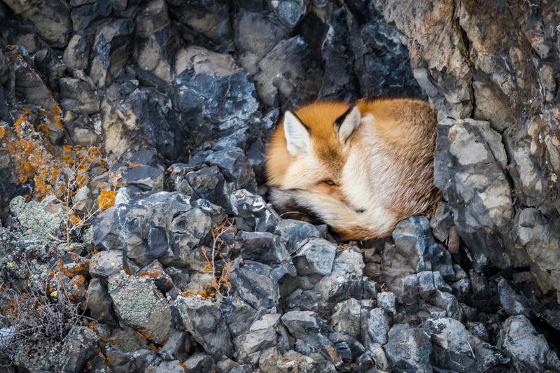 foxpeep-8796-2.jpg