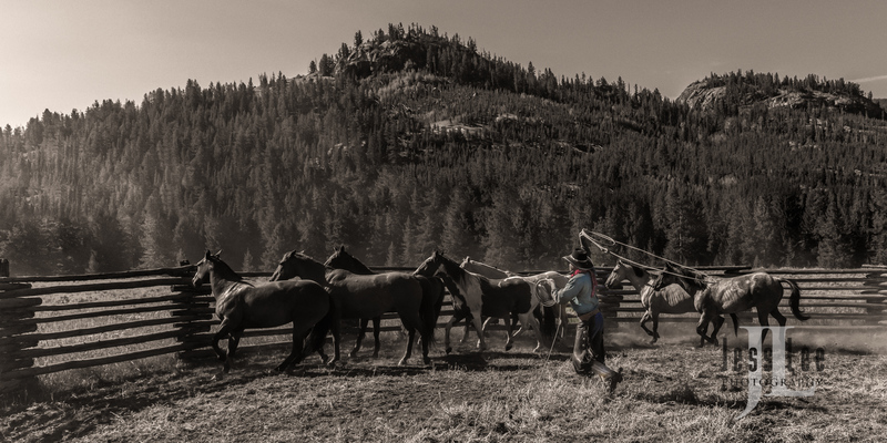 joeropnbwc-(2).jpg :: Cowboy photos from Jess Lee Photo Workshops for cowboys and wild horses available for Stock, Prints, Fine Art. Mustangs from Utah, Wyoming, Oregon, Idaho, Colorado, Arizona, Wyoming, Montana.