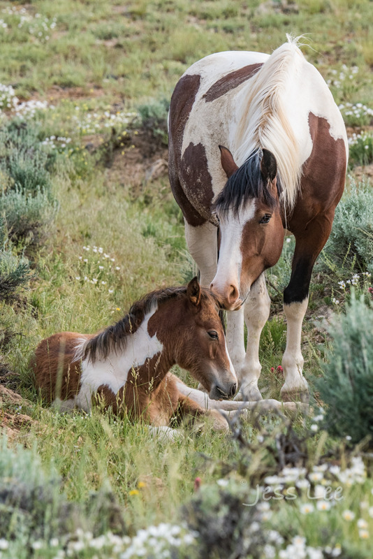 mare-and-foal2-5336.jpg
