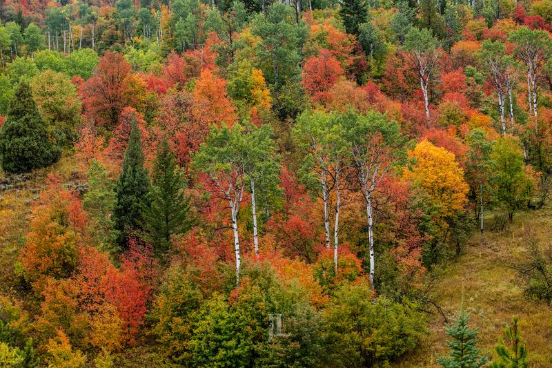mountain color-0323.jpg