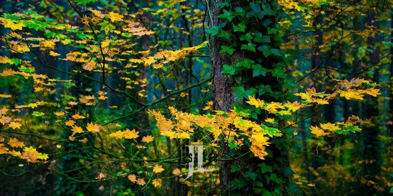 oregon-tree-leaves-6601.jpg
