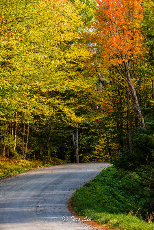 roadshot-1324.jpg