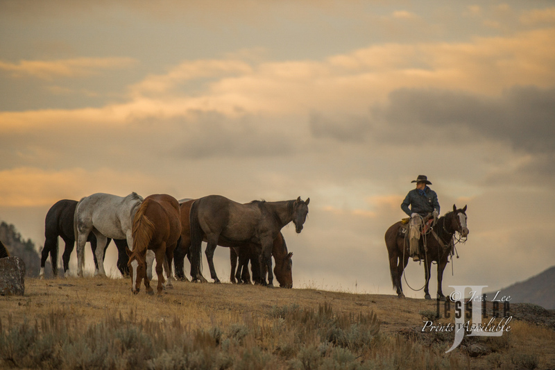 sunrise-1212(2).jpg :: Cowboy photos from Jess Lee Photo Workshops for cowboys and wild horses available for Stock, Prints, Fine Art. Mustangs from Utah, Wyoming, Oregon, Idaho, Colorado, Arizona, Wyoming, Montana.