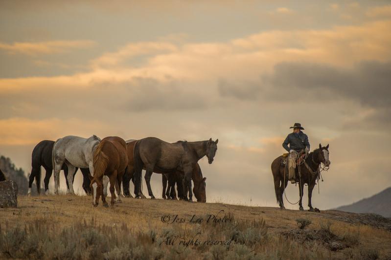sunrise-1212(3).jpg :: Fine Art Photos of Cowboys