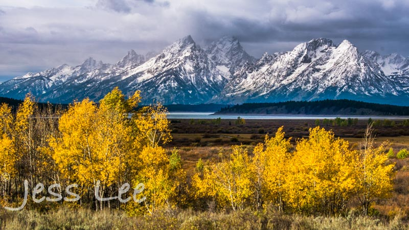 teton-aspens-7324-26927.jpg :: Autumn Color Aspens in Grand Teton National park