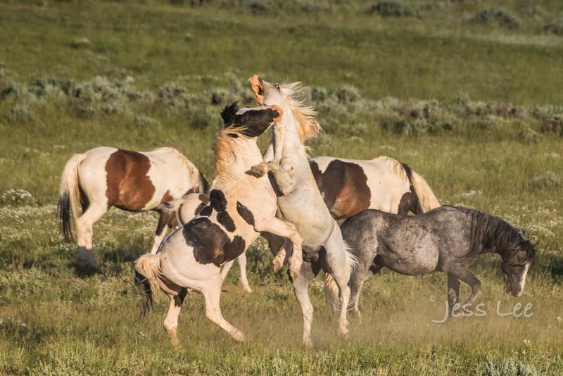 whitehorse-fight-4865.jpg