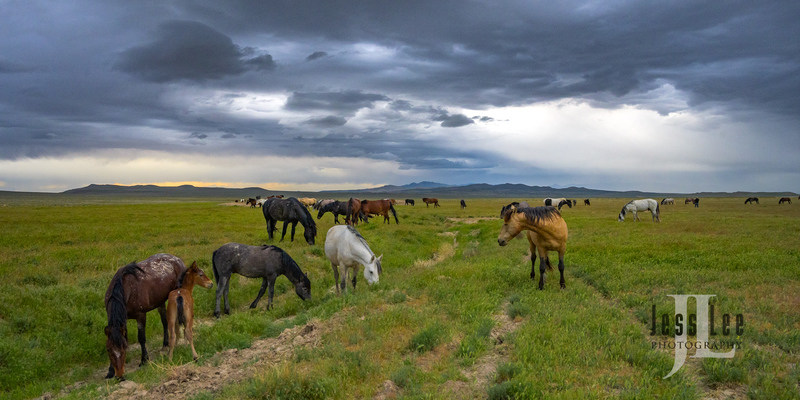 wild horses-2281(1).jpg :: Wild Horse Photos from Jess Lee Photo workshops for wild horses available for Stock, Prints, Fine Art. Mustangs from Utah, Wyoming, Oregon, Idaho, Colorado.