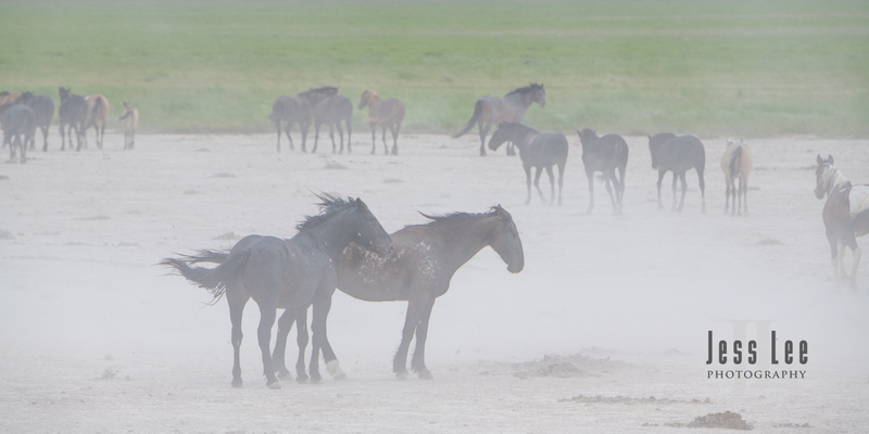 wild horses-2351(1).jpg :: Wild Horse Photos from Jess Lee Photo workshops for wild horses available for Stock, Prints, Fine Art. Mustangs from Utah, Wyoming, Oregon, Idaho, Colorado.