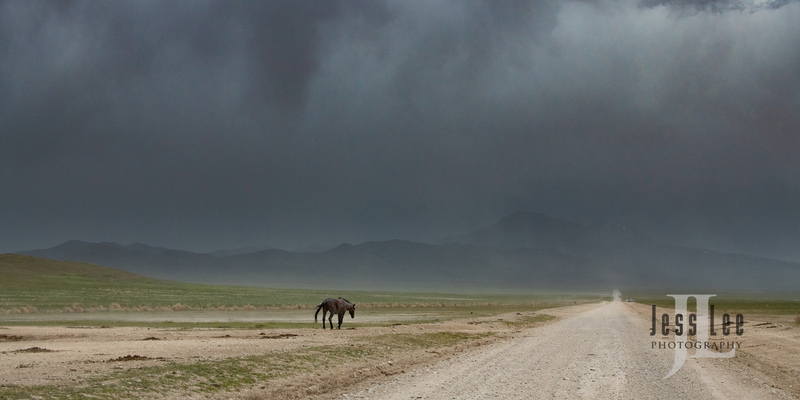 wild horses-2592(1).jpg :: Wild Horse Photos from Jess Lee Photo workshops for wild horses available for Stock, Prints, Fine Art. Mustangs from Utah, Wyoming, Oregon, Idaho, Colorado.