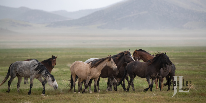 wild horses-2800(1).jpg :: Wild Horse Photos from Jess Lee Photo workshops for wild horses available for Stock, Prints, Fine Art. Mustangs from Utah, Wyoming, Oregon, Idaho, Colorado.
