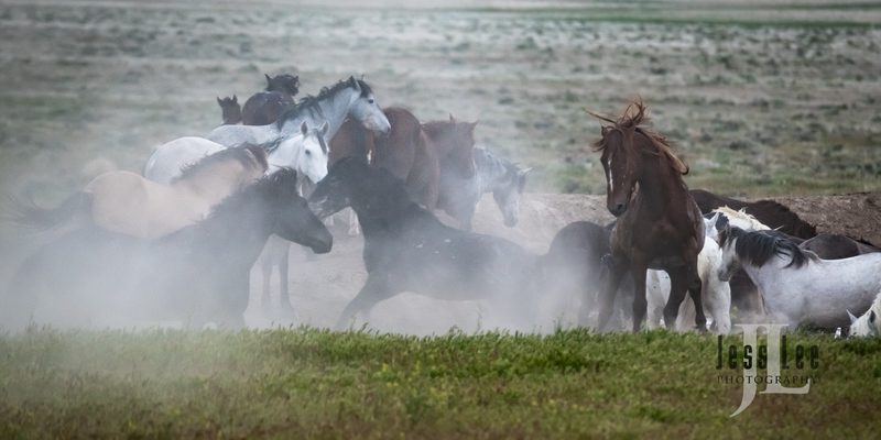 wild horses-2825(1).jpg :: Wild Horse Photos from Jess Lee Photo workshops for wild horses available for Stock, Prints, Fine Art. Mustangs from Utah, Wyoming, Oregon, Idaho, Colorado.