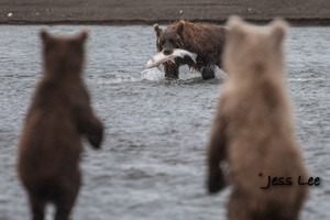 cubs waiting for fish