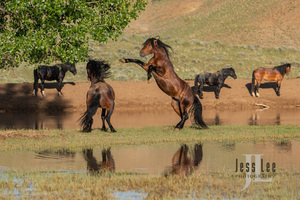 Wyoming Wild Horse Photo Workshop