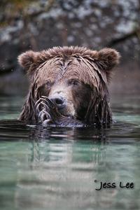 swming bear