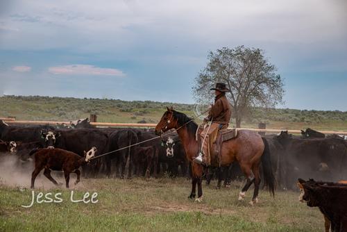 Idaho-Cowboyl-photos-.jpg