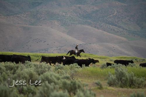 Idaho-Cowboyl-photos-0911.jpg