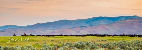 Idaho-Cowboyl-photos-2041.jpg