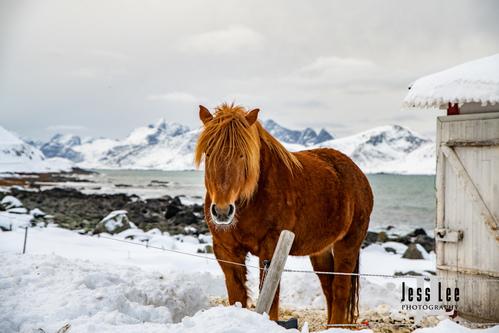 Lofoten-Winter-0046(1).jpg