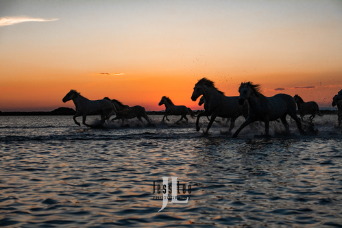 France Photo Workshop, white horses, flowers, villages