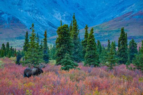 Autumn in Alaska Photo workshop