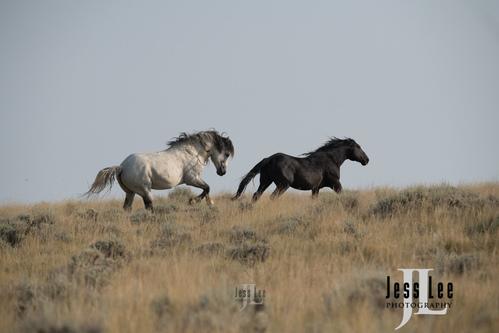 Wyoming Mustangs