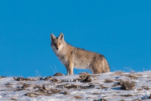 coyoteridge(1).jpg