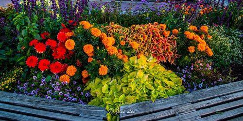 flowerbench-04851.jpg