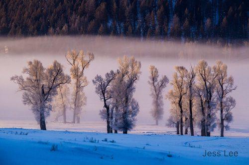 lamarfrsttrees(1).jpg