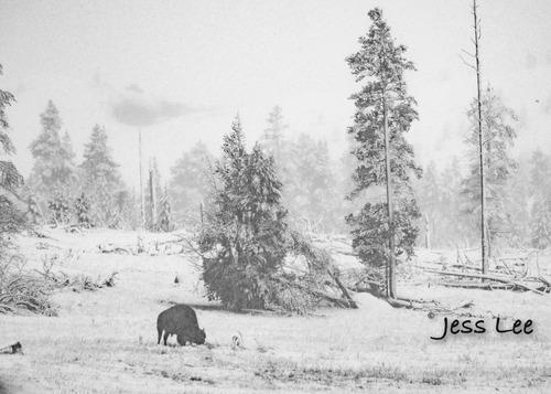 snowbulltrees-7768.jpg