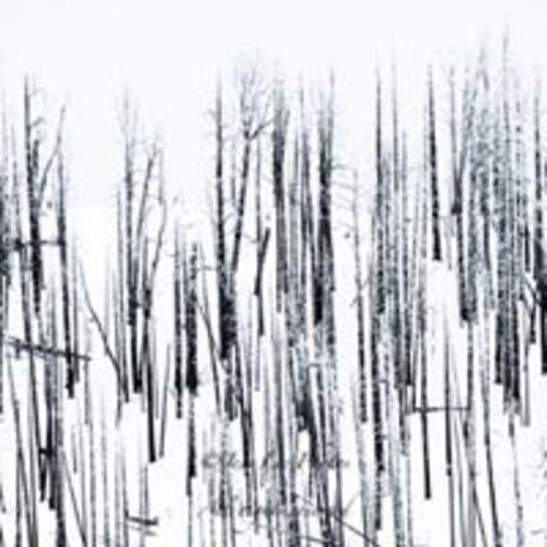 snowsticks(1).jpg
