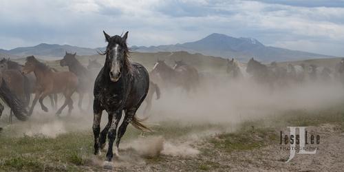wild horses-2461(1).jpg
