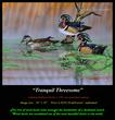 G132 Tranquil Threesome - Wood Ducks Giclee.jpg