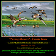 G136 Passing Showers - Canada Geese 72.jpg