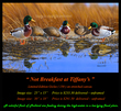 G140 Not Breakfast at Tiffanys - Mallards 72.jpg