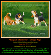 G142 Subjects of Interest - Beagle Pups Giclee 72(1).jpg