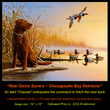 G149 Real Game Saver - Chesapeake Bay Retriever Giclee(1).jpg