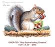 GNOR-793-Squirrel w Chestnut.jpg