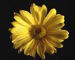 Daisy 2-8-20_HDR-2.jpg