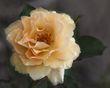 RIPhoto-190831-00016-1.jpg