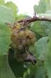 Augusta Winery 2020.jpg