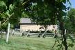 Bryn Mawr Vineyard 2020 III.jpg