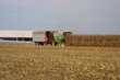 Feed corn Harvest with out hopper.jpg