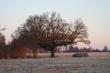 early morning in Missouri.jpg