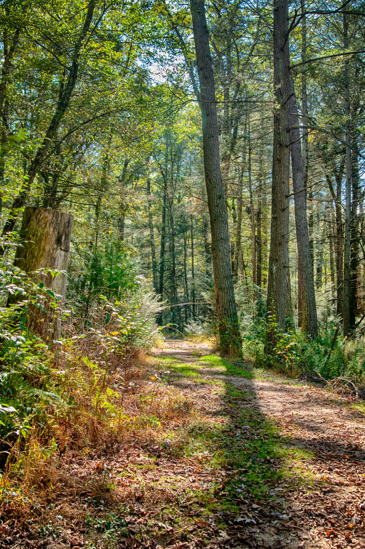 UP-3058-2(1).jpg :: A path in the woods, with trees and shadows around.