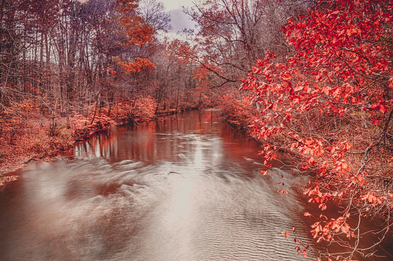 UP-3851(1).jpg :: A stream with striking colors of a stream in autumn.