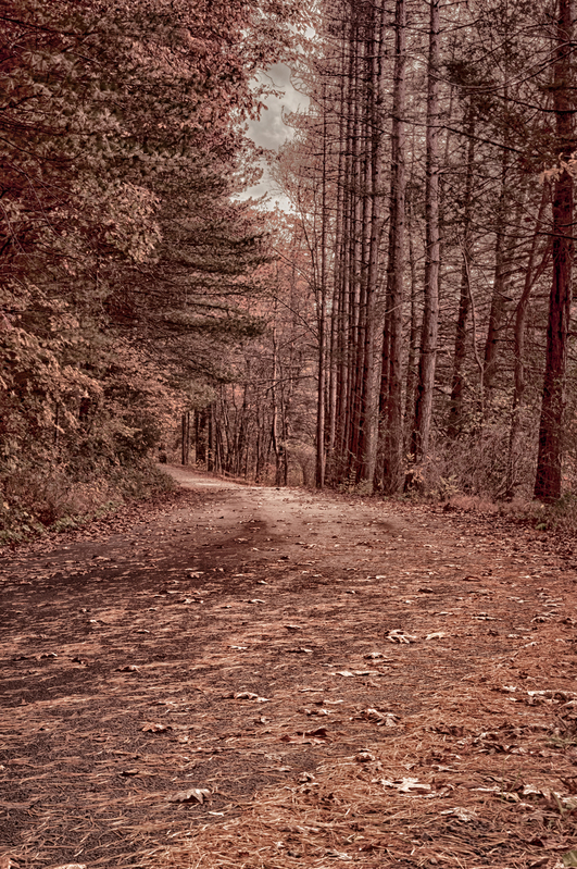 UP-3883(1).jpg :: Road leading around a corner in a wooded area.