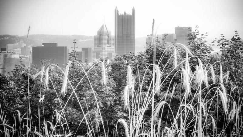 UP-9685(1).jpg :: Pittsburgh Skyline peeking up from the bushes on Mount Washington