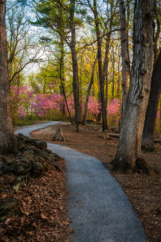 UP6_5187.jpg :: A path along the back side of Little Round Top, Gettysburg.    #Gettysburg, #redbuds