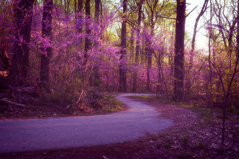 UP6_5198-49.jpg :: Redbud path around the back side of Little Round Top in Gettysburg.